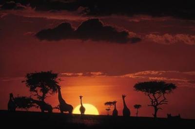 Neoda africana